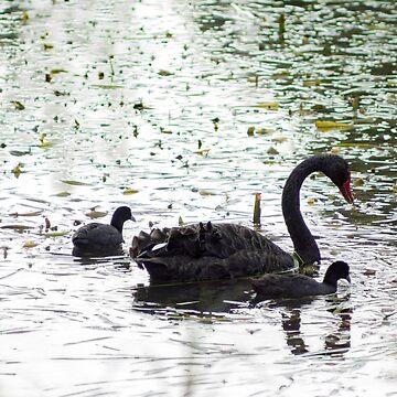 Black Swan by DeborahMcGrath