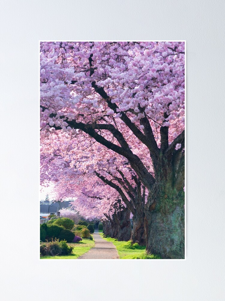 Alternate view of Blossoming Street Poster