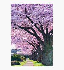 Blossoming Street Photographic Print