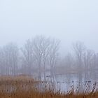 Marsh with reed and trees in the mist by xophotography