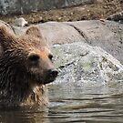 Water Baby Bear by CreativeEm