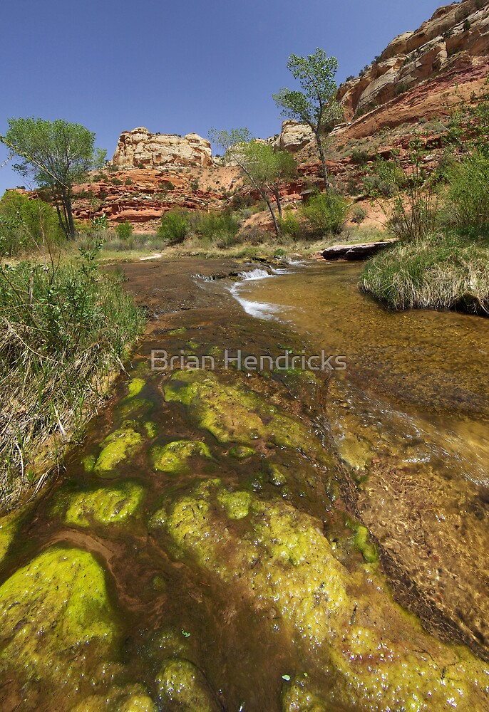 Calf Creek, Calf Creek Campground, Utah by Brian Hendricks