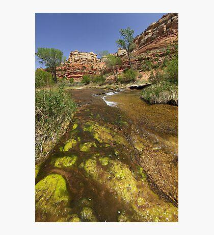 Calf Creek, Calf Creek Campground, Utah Photographic Print