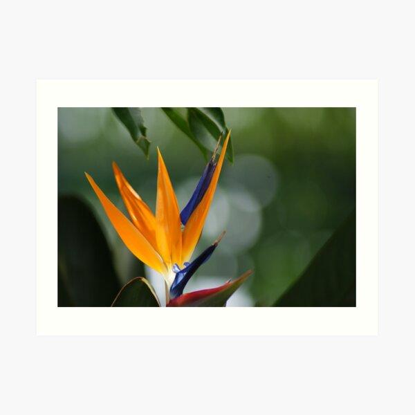 parrot flower Art Print