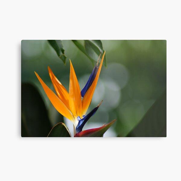 parrot flower Metal Print