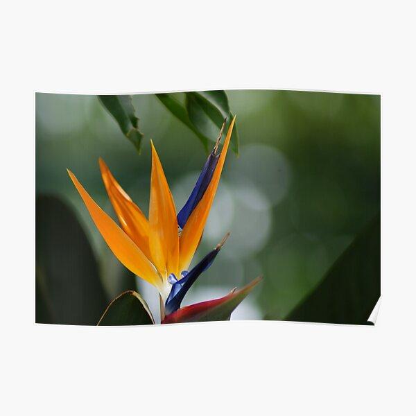 parrot flower Poster