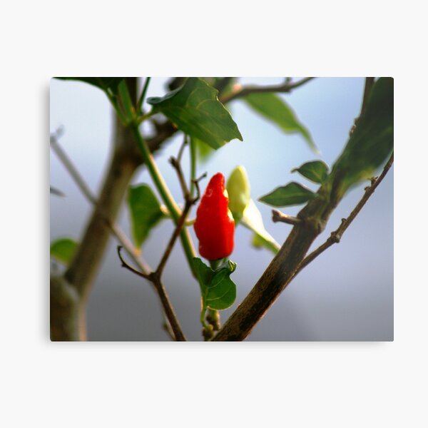 One Hot Picture Metal Print
