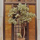 Window Dressing...................Rome by Fara