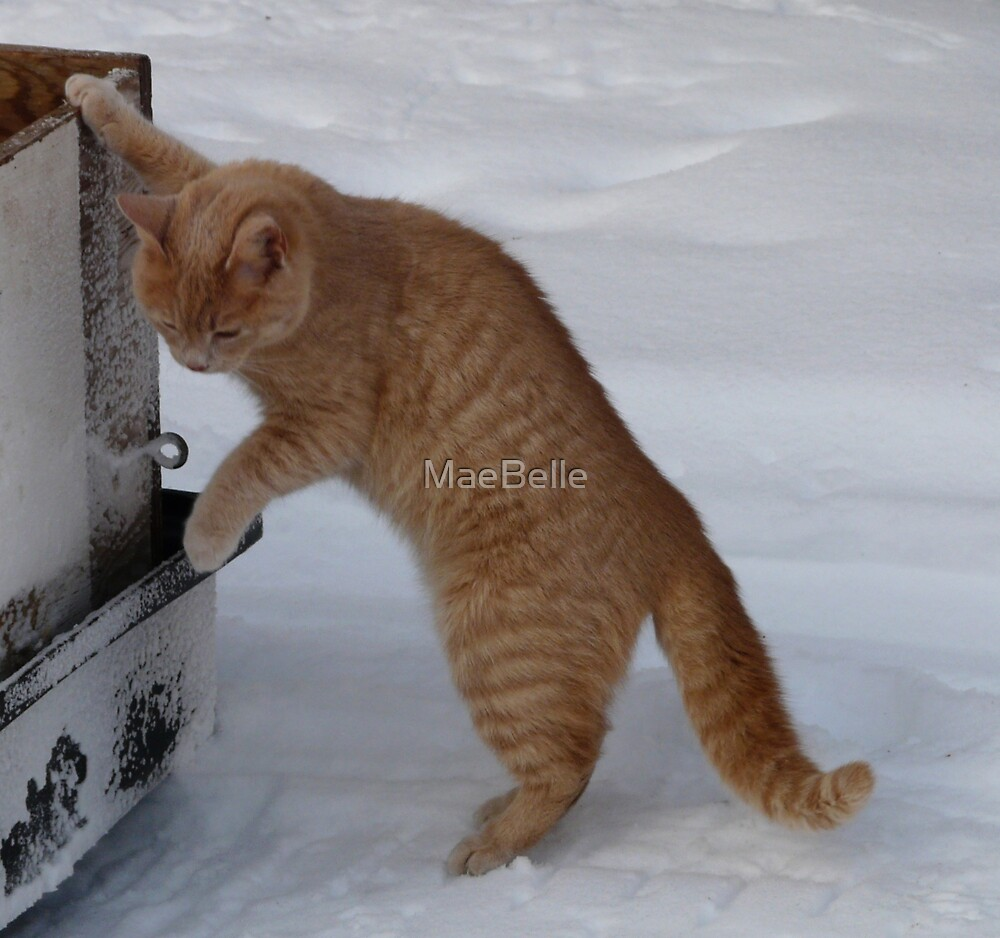 TeeDoo checking what's in the sled by MaeBelle