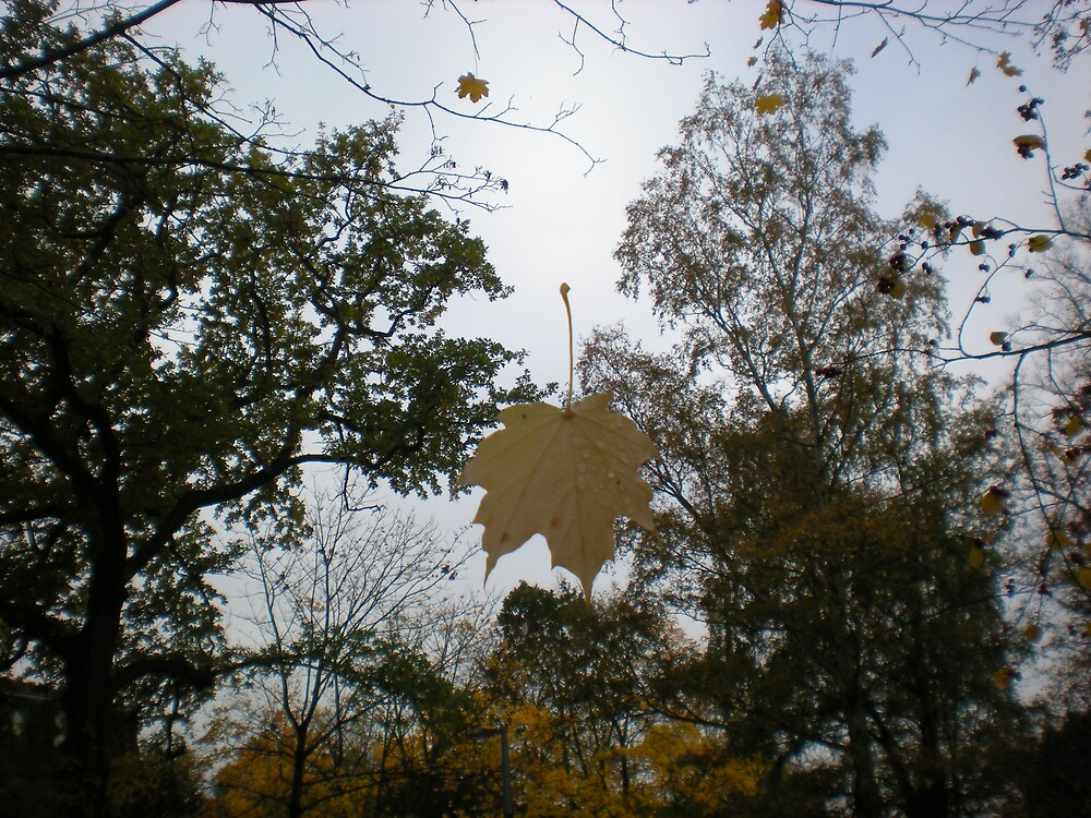 the leaf by kezzaroo