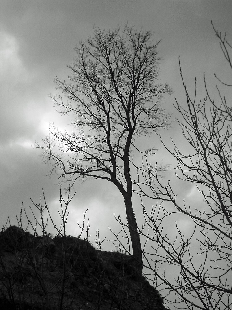 Lonely tree against a winter sky by presbi