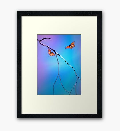 Morning Butterflies Framed Print