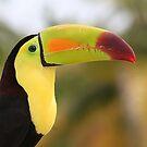Colorful Tucan by Teresa Zieba