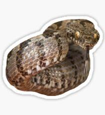 Ottoman Viper Snake Tasting The Air Sticker