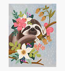Cute Sloth Photographic Print