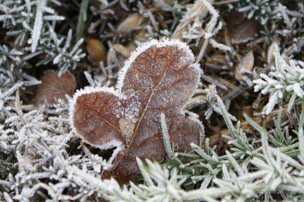 Cold and frosty morning by joseph halliday