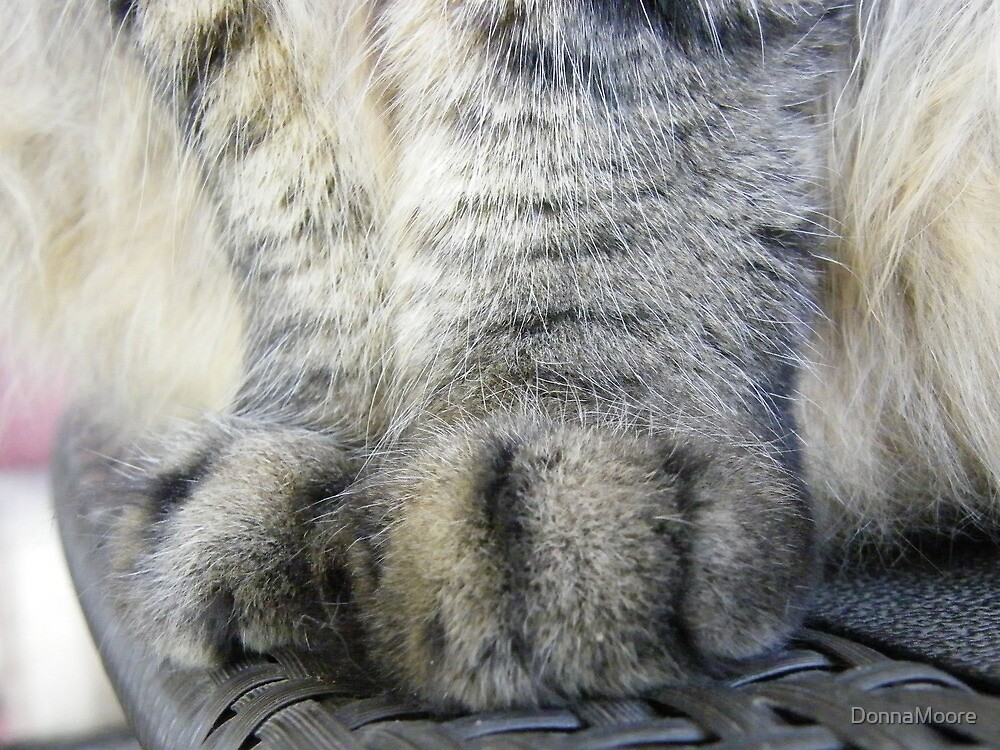 My cat has UGG boots for paws..... by DonnaMoore