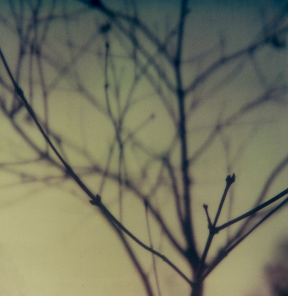 #005 by Paul Desmond