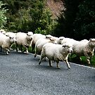 Surrounded By Sheep by kaneko