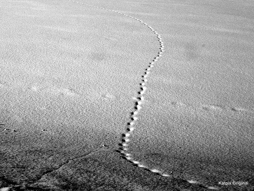 Tracks in the Snow by katpix