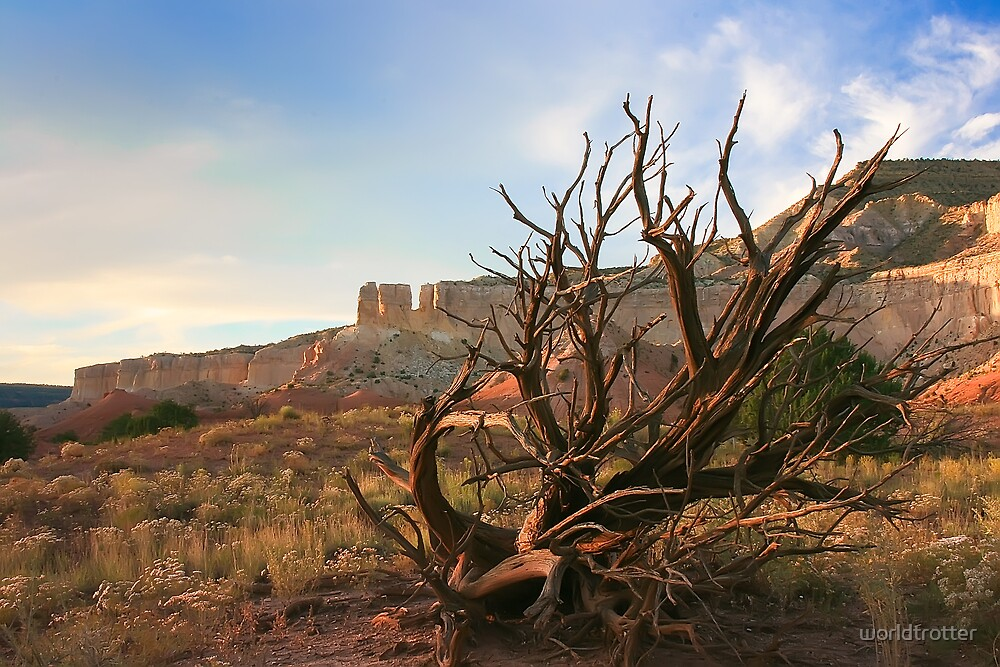 Still Nature, Ghost Ranch, New Mexico by Tomas Abreu