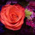 PURPLE MIDNIGHT AND ORANGE SUNSET ROSE by Elaine Bawden
