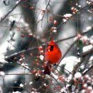 Snow Bird by Jill Sprague