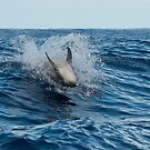 Female Oceanic Bottle Nose Dolphin Performing in the Wild by Janette Rodgers