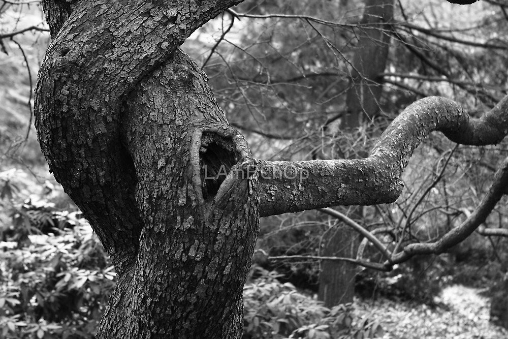 Anguish of the Tree by LAmBChOp