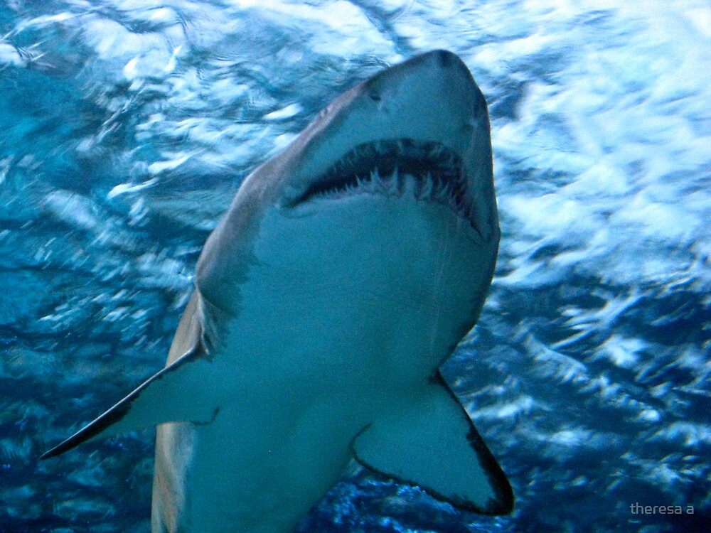 WATCH OUT JAMES, THE SHARK by theresa a