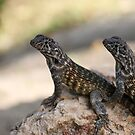 Lizard pair by Steve Small