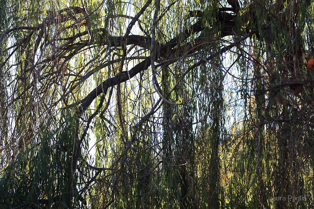 Weeping Willow by Laura Puglia