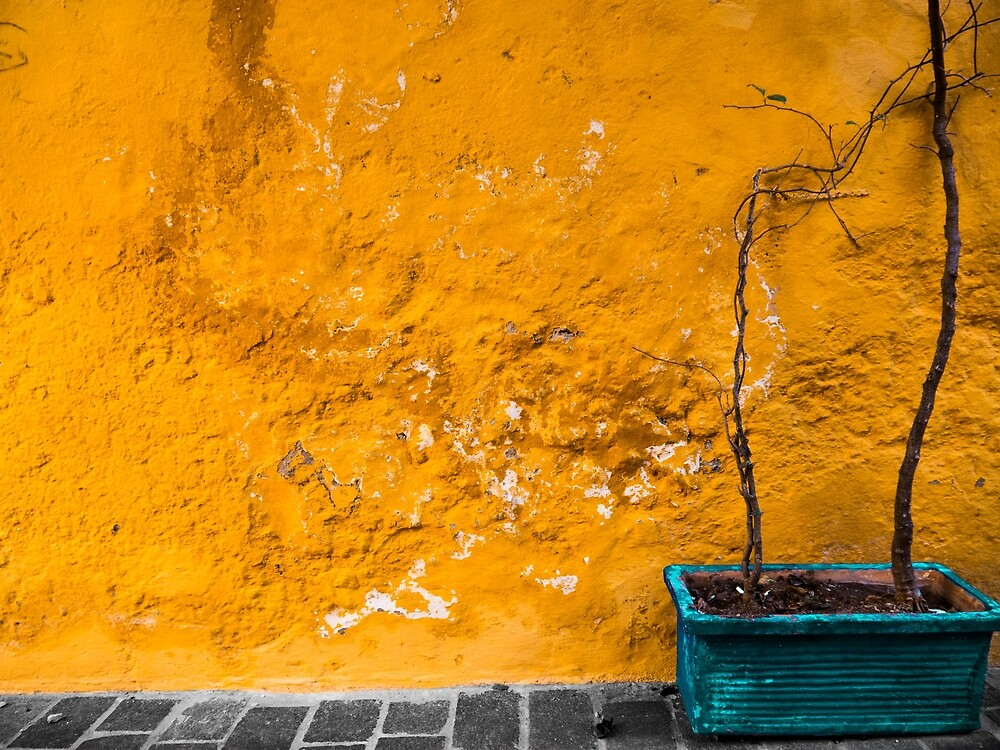 The Yellow Wall by Rae Tucker