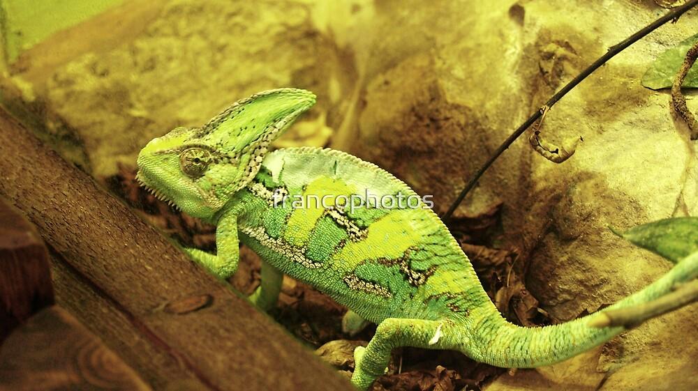 Desert Chameleon by Franco De Luca Calce