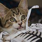 Oh Meow Bambino by Georgie Hart