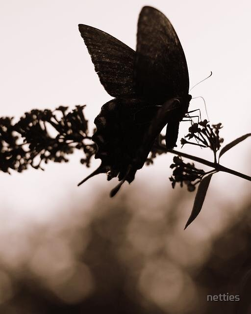 Summer Butterfly by netties