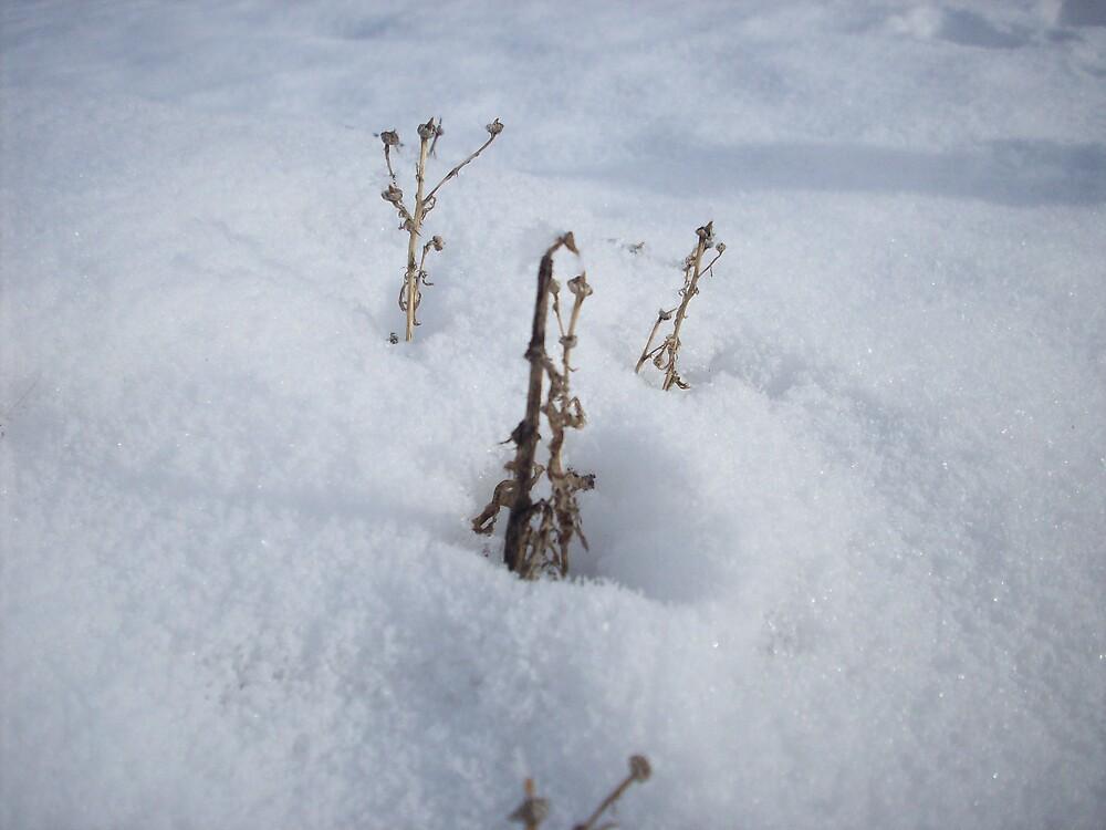 dead plants by Jessica Leavitt
