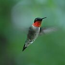 Ruby throated Hummingbird by Roxane Bay