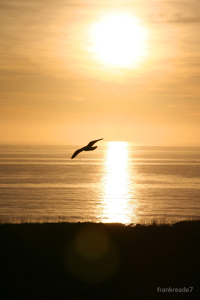 sunset flight by frankreade7