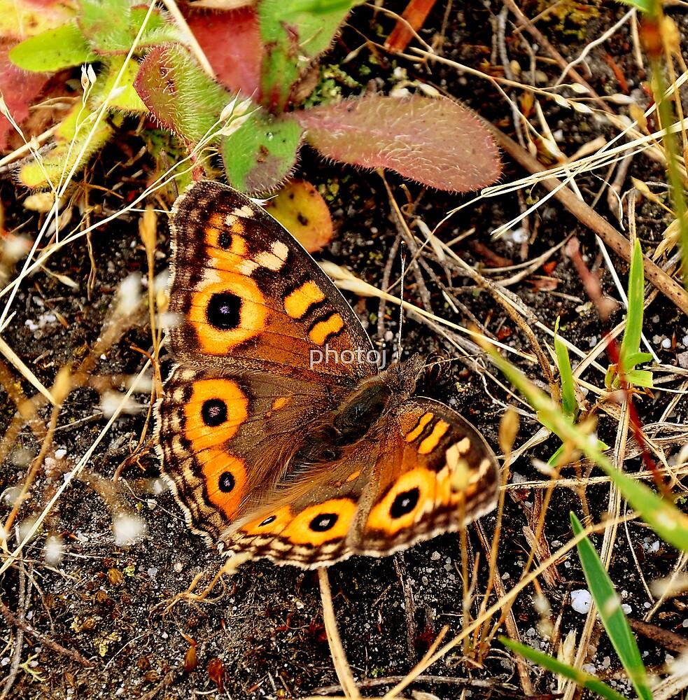 photoj Butterfly Time by photoj