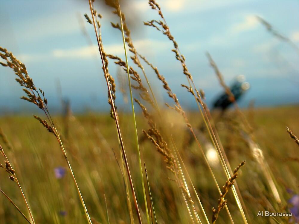 Prairie by Al Bourassa