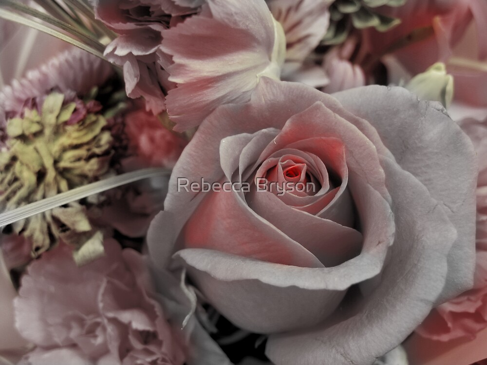 Blushing Pink by Rebecca Bryson