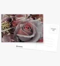 Blushing Pink Postcards
