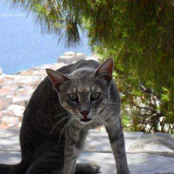 Greek Cat by DeneWest