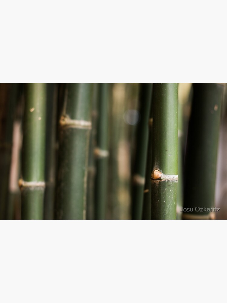 Green bamboo canes by Joshollywood