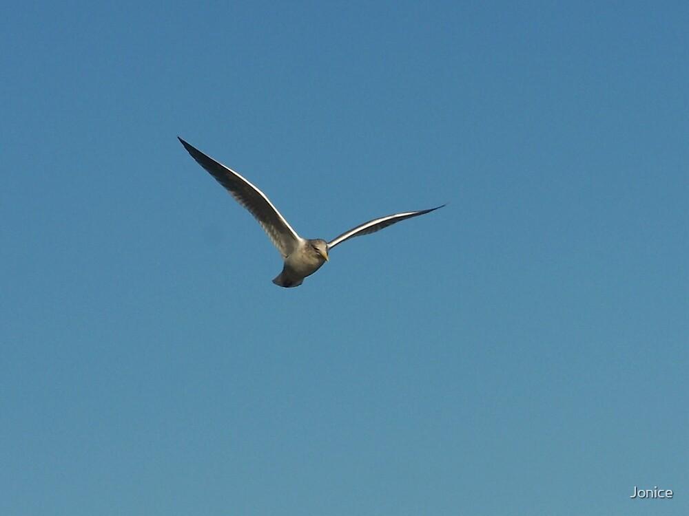 Flying High by Jonice
