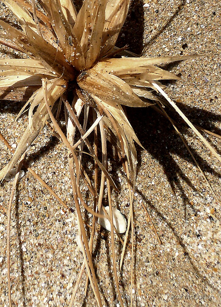 Grass Seed, Apollo Bay by Roz McQuillan