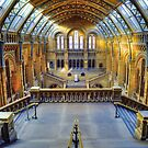 Natural History Museum by Bruce Alexander