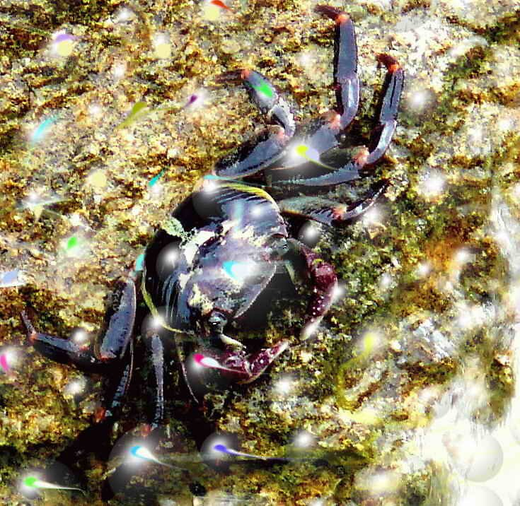 life in a rock pool {crab disco} by robinof