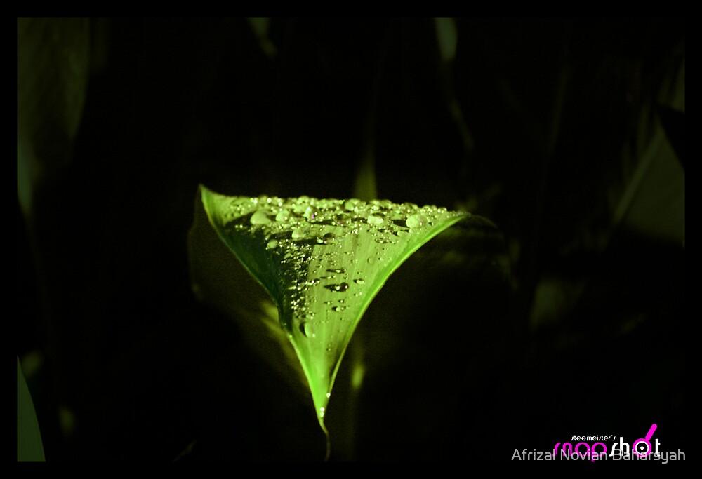 After The Rain by Afrizal Novian Baharsyah